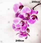 Фотообои Флора 707115133