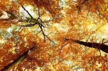Фотообои Природа 5-013